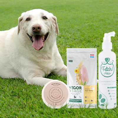 It's International Dog Day! Here Are 5 Ways to Pamper Your Pawed Pal