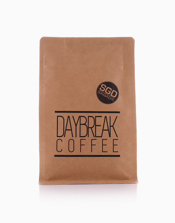 Sagada Blend Pouch of 12 by Daybreak Coffee