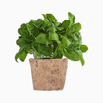 Basil DIY Garden Kit by Qubo
