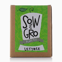 Lettuce Plant Kit by Sow and Gro
