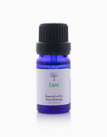 Lime Essential Oil (10ml) by Bathgems