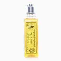 Verbena Shampoo by L'Occitane