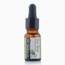 Tea Tree Essential Oil (10ml) by FAVORI in