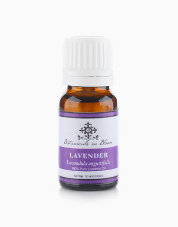 Lavender Essential Oil by Botanicals in Bloom