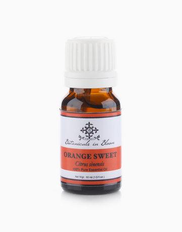 Orange Sweet Essential Oil by Botanicals in Bloom
