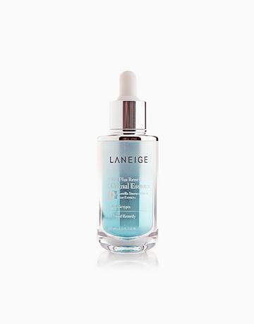 White Plus Original Essence by Laneige