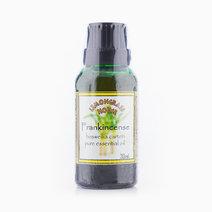Frankincense Essential Oil (30ml) by Lemongrass House