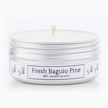 Fresh Baguio Pine Soy Candle (2oz) by Calyx Life & Home