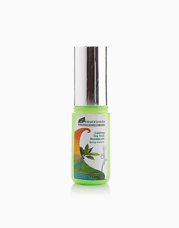 Tea Tree Deo Spray (50ml) by Zenutrients