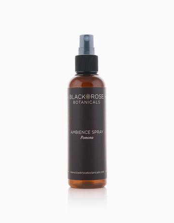 Ambience Spray by Black Rose Botanicals