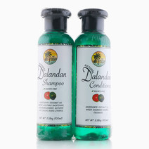 Dalandan Hair Care Set by The Tropical Shop